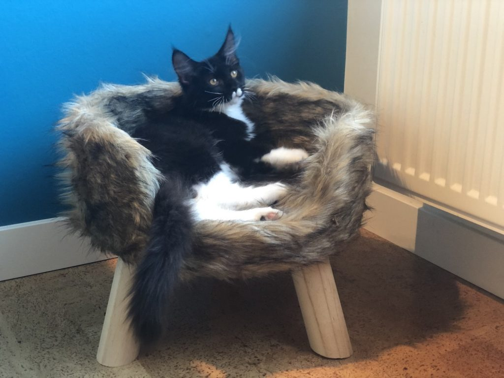 Meet Merlin