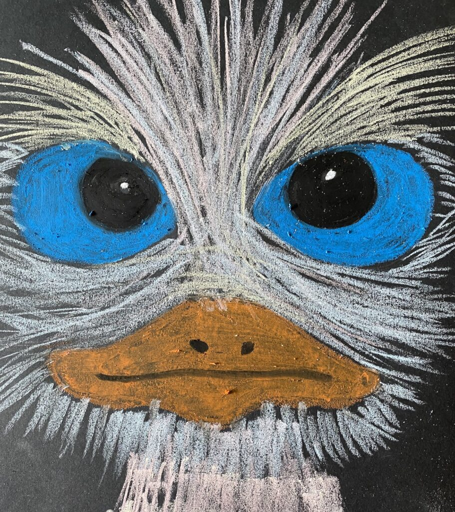 BordKrijtStruisvogel